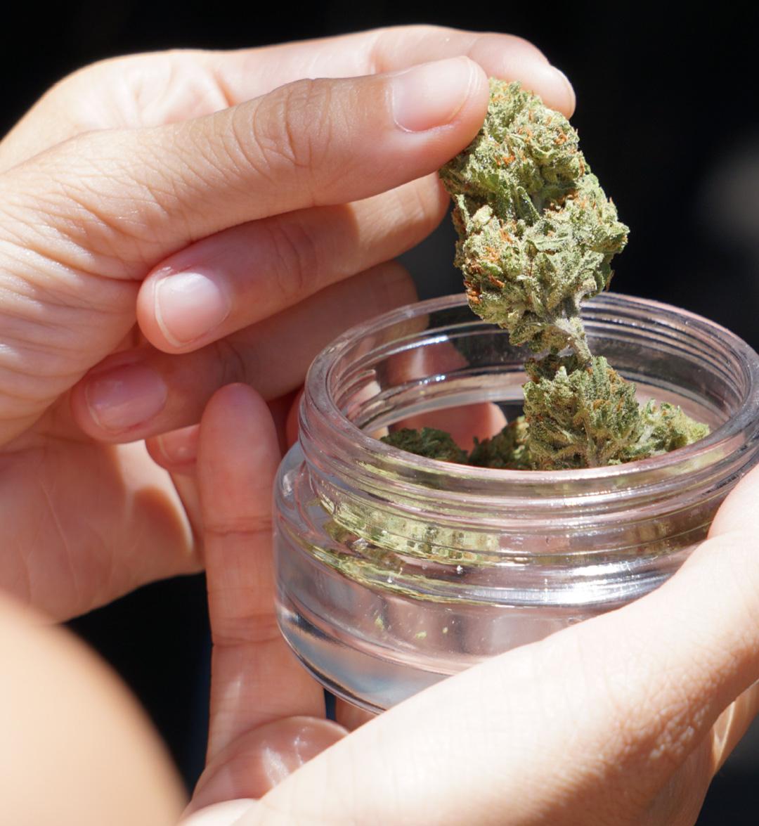 Cogollo flor de CBD cannabis