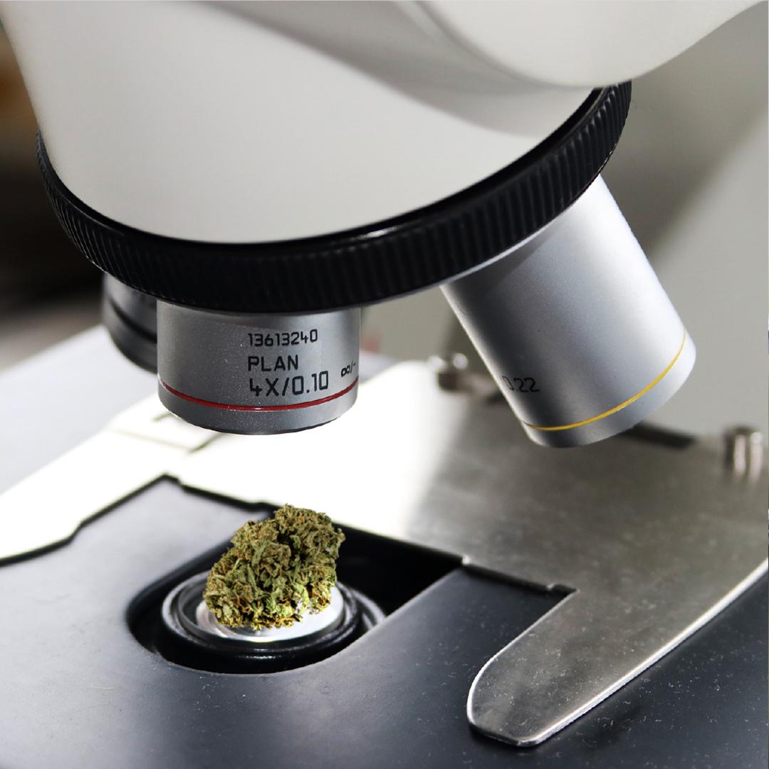 CBD Test THC Oil Cannabis aceite